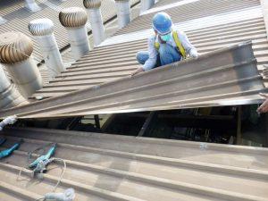 Bongkar zincalume yang lama untuk instalasi atap penerang fiberglass